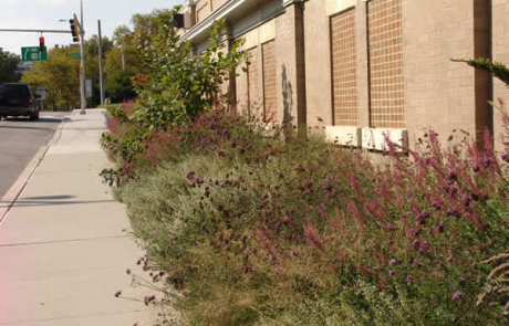 landscaping on side of commercial building